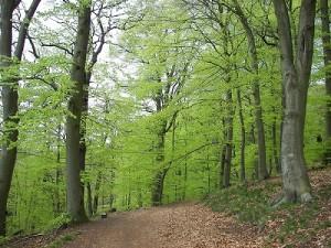 Forêt de Compiègne à proximité du camping d'Attichy